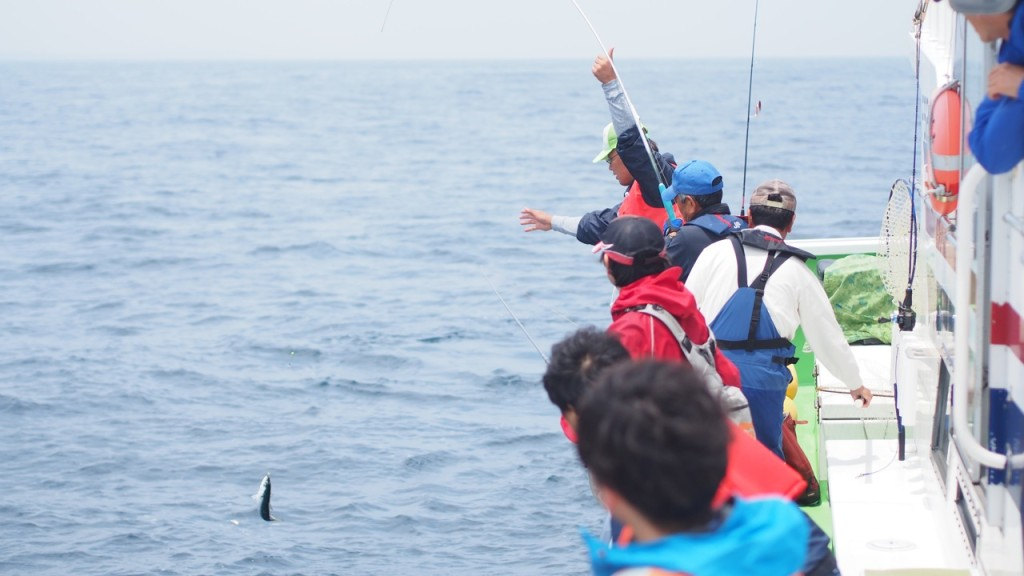 青物マサバもゲット! やはりこの海は豊かです。